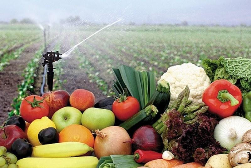 Corporativo Kosmos: frutas y verduras del campo a la mesa