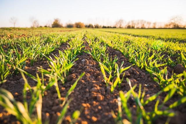 coporativo kosmos duenos, fomento de produccion de alimentos organicos, operacion organica de las actividades agropecuarias