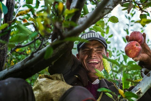 corporativo kosmos, seguros agricolas, derechos de los agricultores en mexico