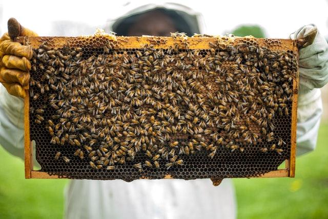 productos serel, dia nacional de las abejas, proteccion abejas en mexico, dia nacional de las abejas