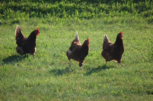 productos serel, servicios de alimentacion, huevo de gallina