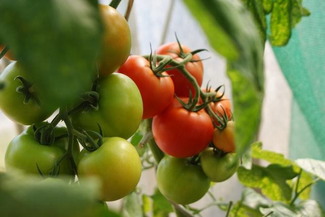 corporativo kosmos duenos, sostenibilidad en campo, serna agricola